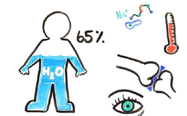 Điều gì sẽ xảy ra với cơ thể khi bạn ngừng uống nước?